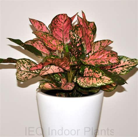 best plant for indoor low light best low light indoor plants 28 images 19 best low