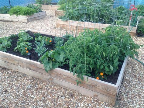community vegetable garden community vegetable garden installation in fort lauderdale