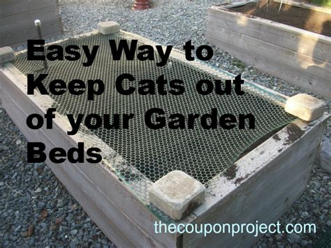 how to keep cats out of vegetable garden cheap and easy solution to keep cats out of your garden
