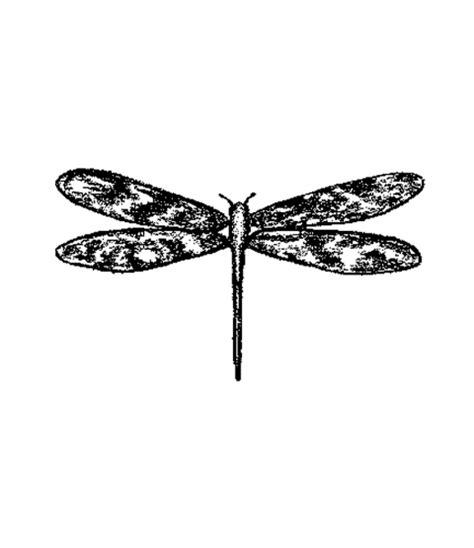 dragonfly rubber st dragonfly wood mount st g2 10118f