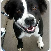Toby   Adopted ...