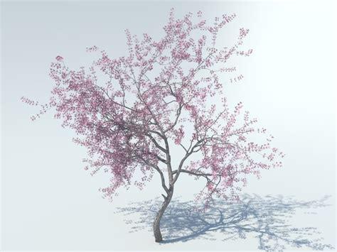 cherry blossom tree 3d model free 3d realistic tree model