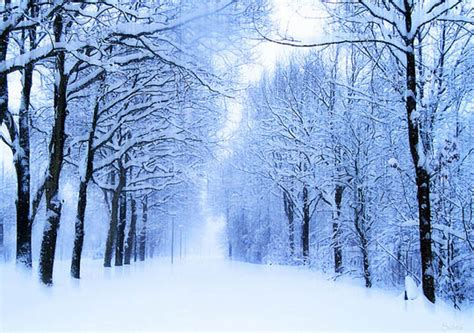 snowy tree pictures the magic of nature 35 dazzling snowy tree photos designbeep