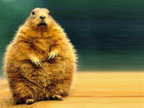 groundhog day jpg sweet smoothie