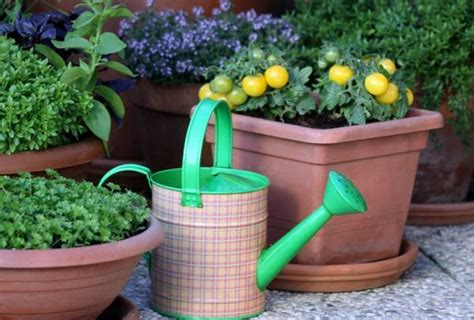 potted vegetable garden growing vegetables in pots starting a container