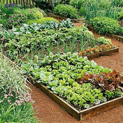 vegetables for home garden planning your vegetable garden country chic