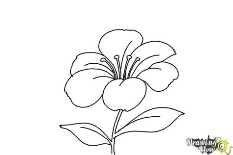 flowers step by step how to draw a flower step by step drawingnow