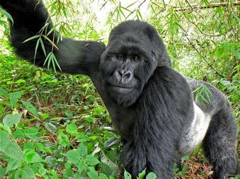 Real Jungle Animals My Hd Animals
