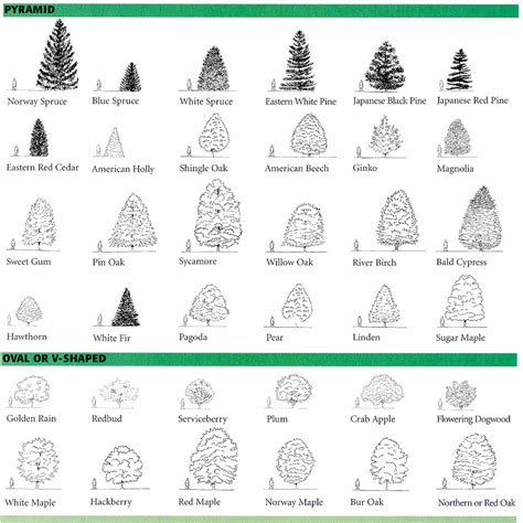 tree shapes lecture notes