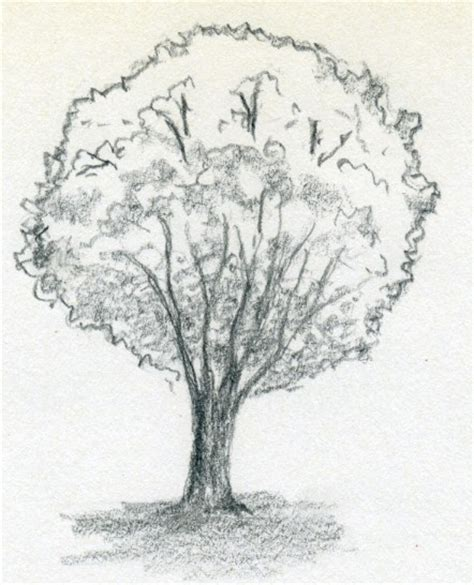 tree drawing free coloring pages of how to draw a tree