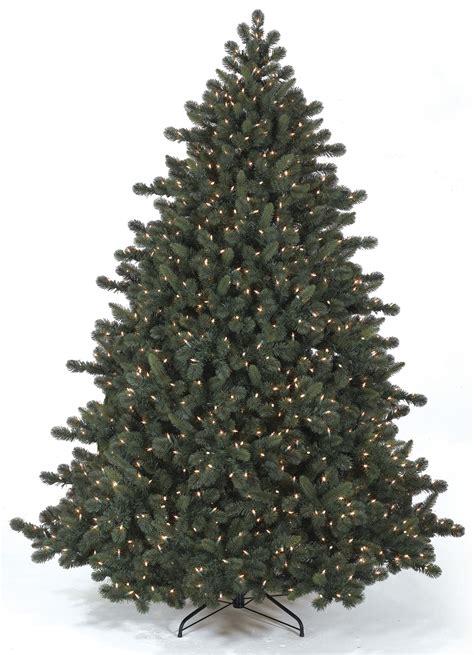 kiefer weihnachtsbaum the pine tree free pictures finder