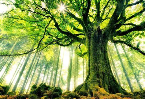 wallpapers of tree 191 mandarle mail a un 225 rbol 161 ahora pod 233 s planeta vivo
