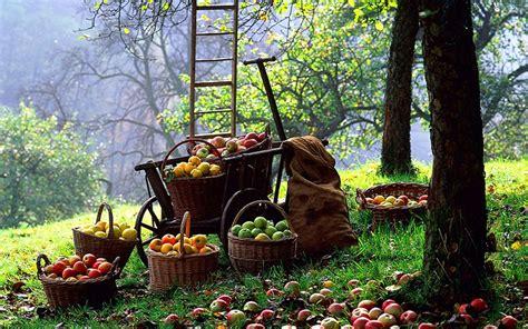 harvesting trees apple tree planting growing pruning and harvesting