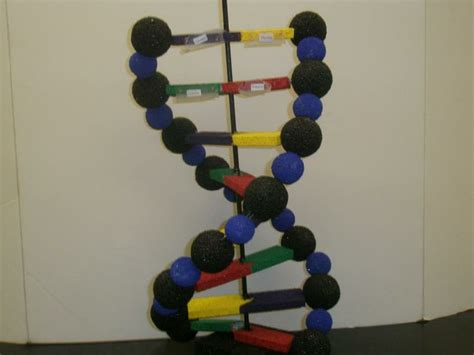 dna craft project pin by on crafts and diy