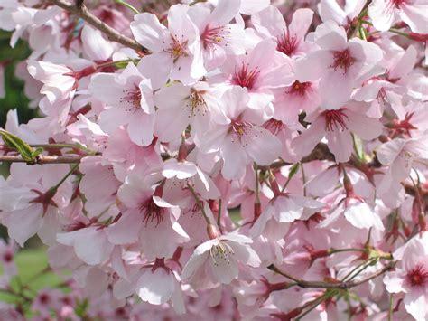 blossom valley auckland botanic gardens