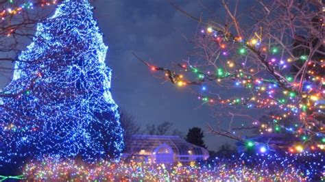 toledo zoo lights hours toledo zoo hours lights before
