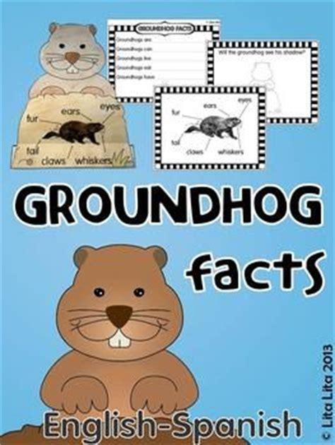 groundhog day information groundhog day 171 diy ideas