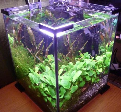 nano planted aquarium without added co2 tanks