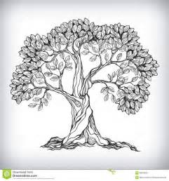 tree drawing best 25 tree drawings ideas on trees drawing