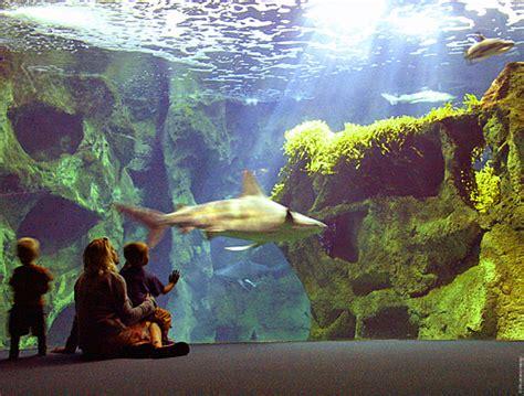 aquarium la rochelle pr 233 parer votre voyage avec voyages sncf