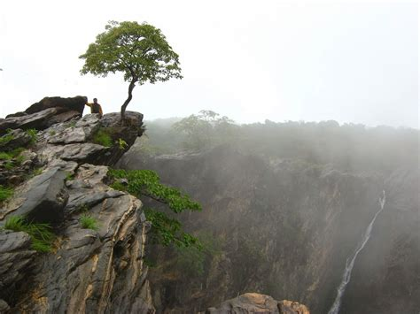 panoramio photo of quot tree at the cliff quot jog falls