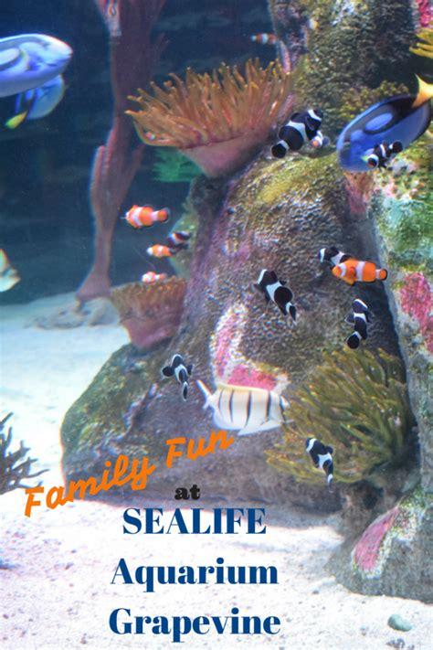family sealife aquarium grapevine family adventure