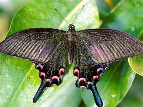 botanischer garten münchen anfahrt tropische schmetterlinge m 252 nchen das offizielle