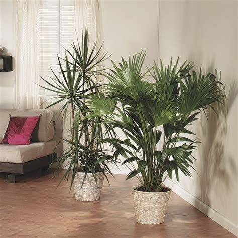 house for plants care for houseplants