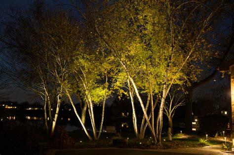 landscape lighting uplight trees outdoor lighting ryco landscaping