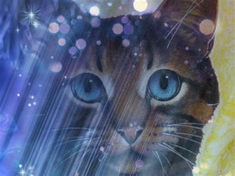 warrior cats my top collection warrior cats wallpaper