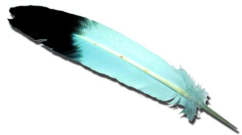 feather with kimberlyzoe feather me fabulous