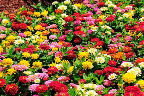 garden flower types 25 types of flowers to plant for summer summer flowers
