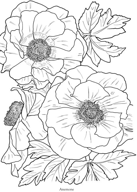 coloring book pictures of flowers flowers free coloring pages