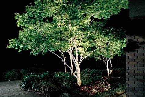 landscape lighting uplight trees tree uplight marquee equipment hire