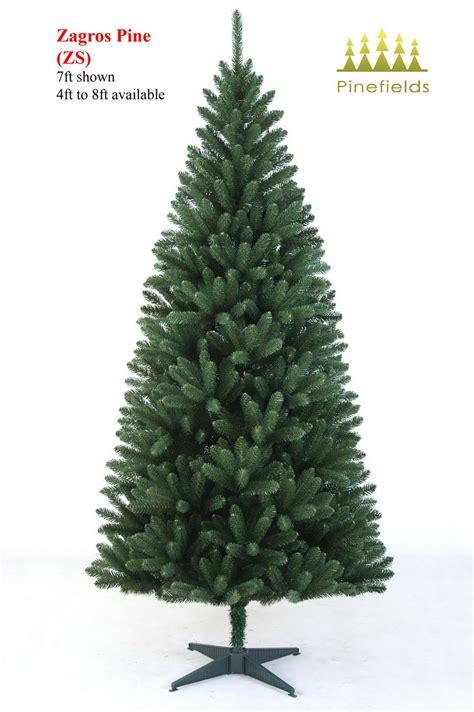 kiefer weihnachtsbaum china tree zagros pine china trees