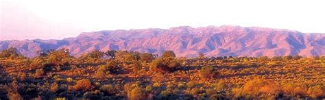australian arid lands botanic garden sa landscape architecture