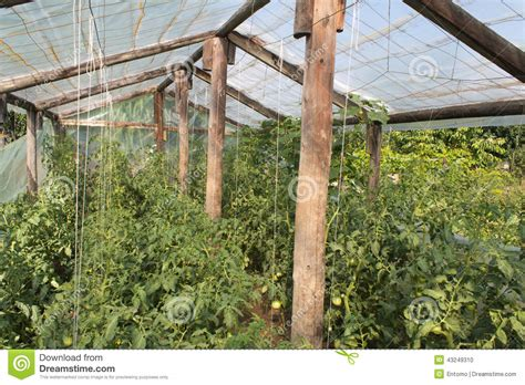 Free A Frame House Plans small greenhouse with tomato plants stock photo image