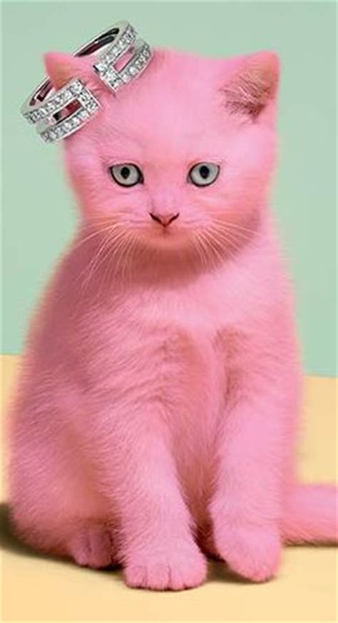 pink cat 25 best ideas about pink cat on cat paws