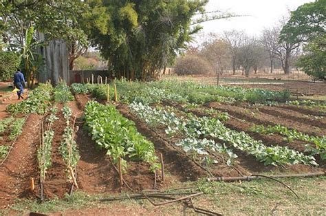 community vegetable garden how to plan and plant an organic community vegetable