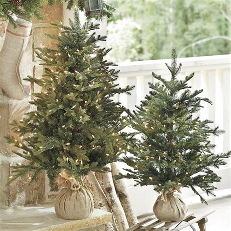 traditional plants suzanne kasler frasier fir tabletop tree traditional