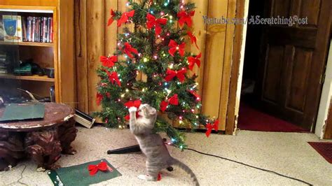 tree set up cats help set up and tear tree caturday