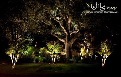 landscape lighting for trees landscape lighting tropical landscape other metro