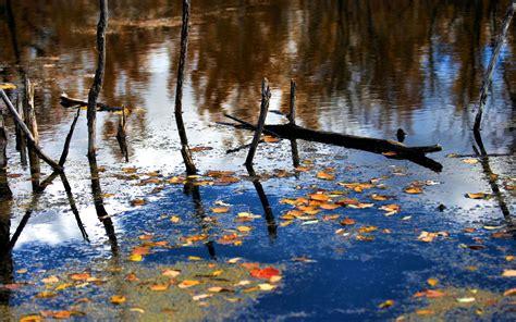 Der Garten Der Toten Bäume abgestorbene b 228 ume im wasser hintergrundbilder