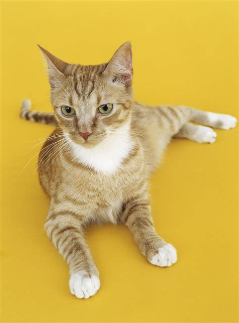 picture of a cat and cat health cw feed products inc