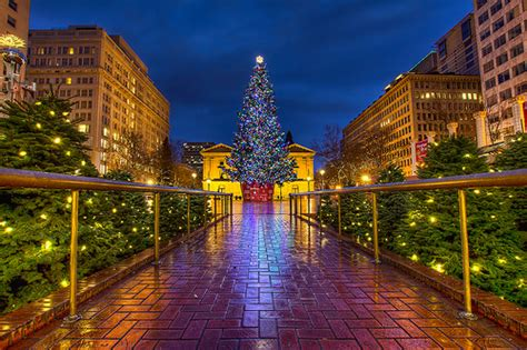 pioneer square tree portland tree pictures 2014