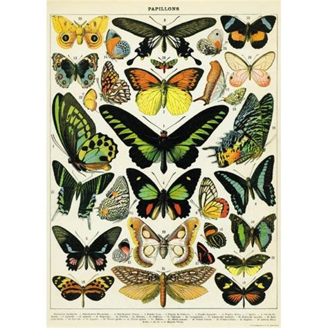 prints for decoupage 20 215 28 history butterflies decorative decoupage