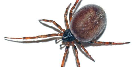 Garden Spider False Widow False Widow Spiders In The Uk Should We Be Worried
