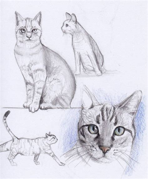cat simple simple cat drawing exles anyone can try photofun4ucom