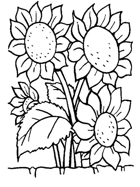 coloring book pictures of flowers flowers coloring pages coloringpages1001