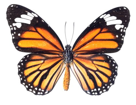 of a butterfly the meaning and symbolism of the word 171 butterfly 187